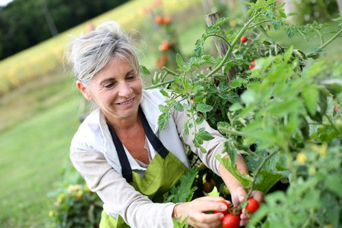Spending just half an hour a day gardening could reduce your risk of heart attack by over 50%