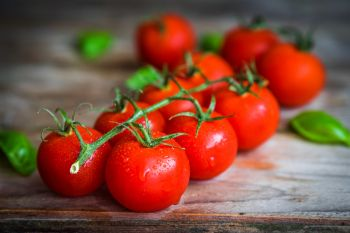 Train your cordon tomatoes