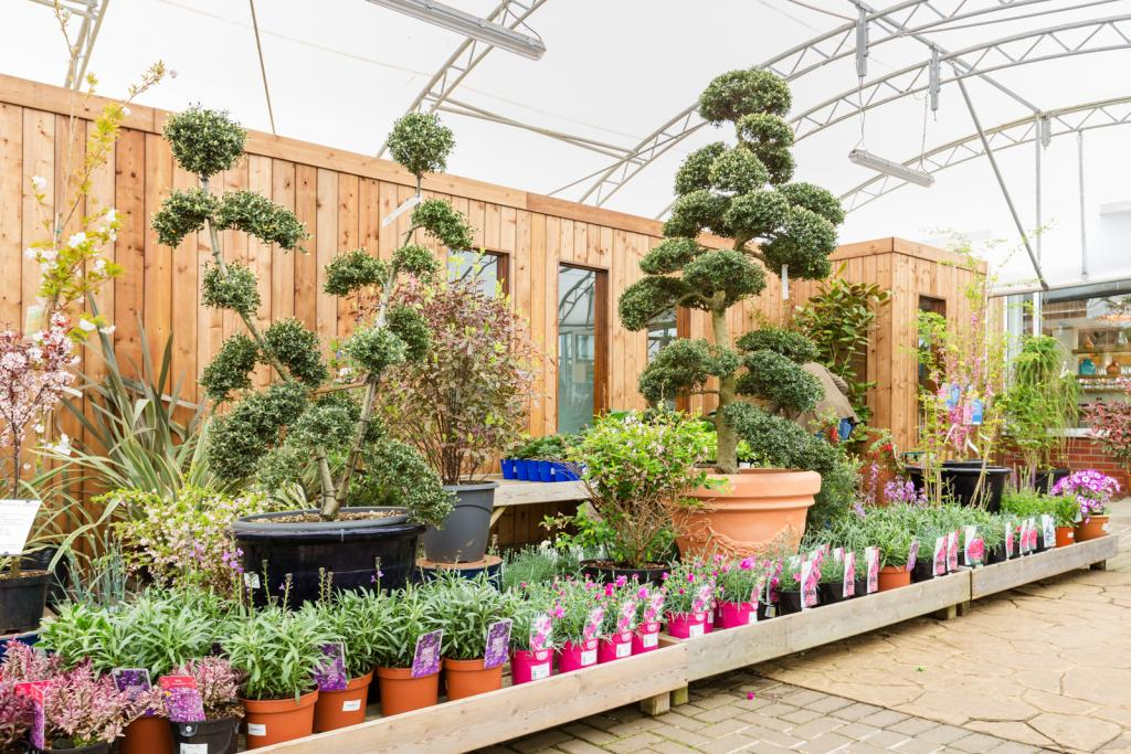 Ashtead Park Garden Centre - Plant Shop near London