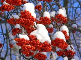 Best winter shrubs
