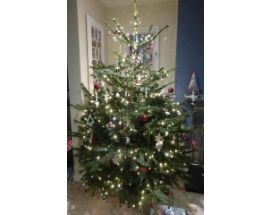 Decorated Premium Nordmann Fir